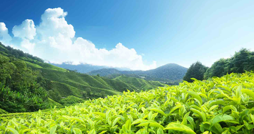 2 Nights 3 Days Munnar Tour Packages | The Best Munnar Holidays