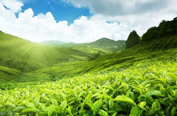4 nights 5 days Exotic Kerala tour covering Munnar to Alleppey