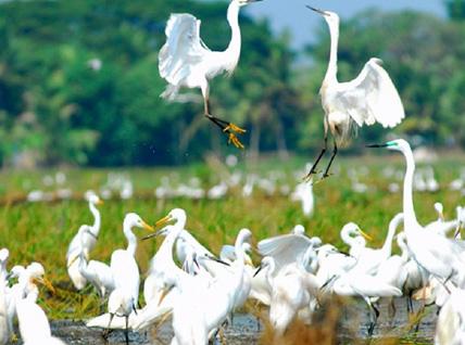 Magical Kerala Tours