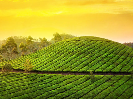 CGH Earth Luxury Tour With Munnar
